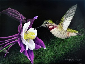 colibris-coyright-my 300x300